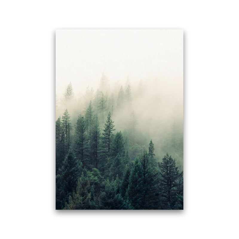 The Fog And The Forest II Print Only