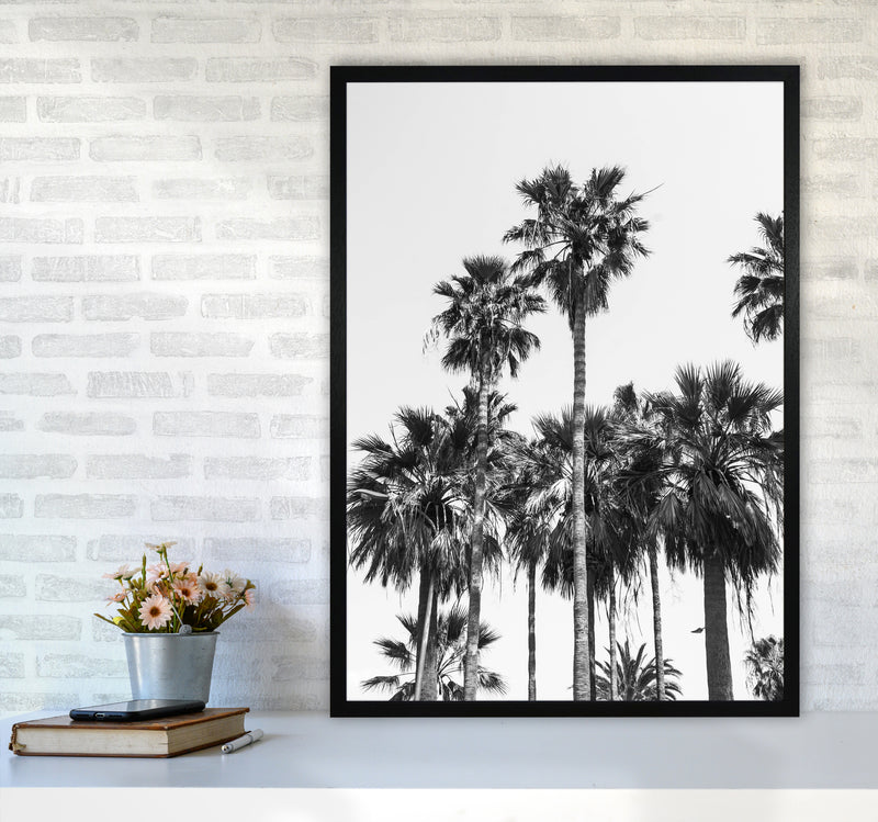 Sabal palmetto II Palm trees Photography Print by Victoria Frost A1 White Frame