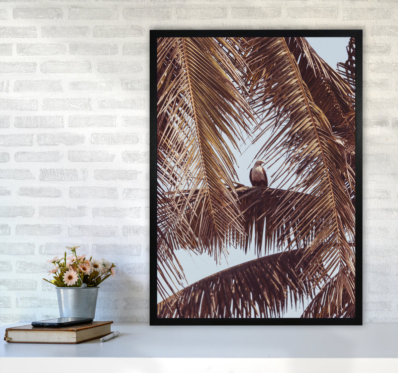 Eagle Photography Print by Victoria Frost A1 White Frame