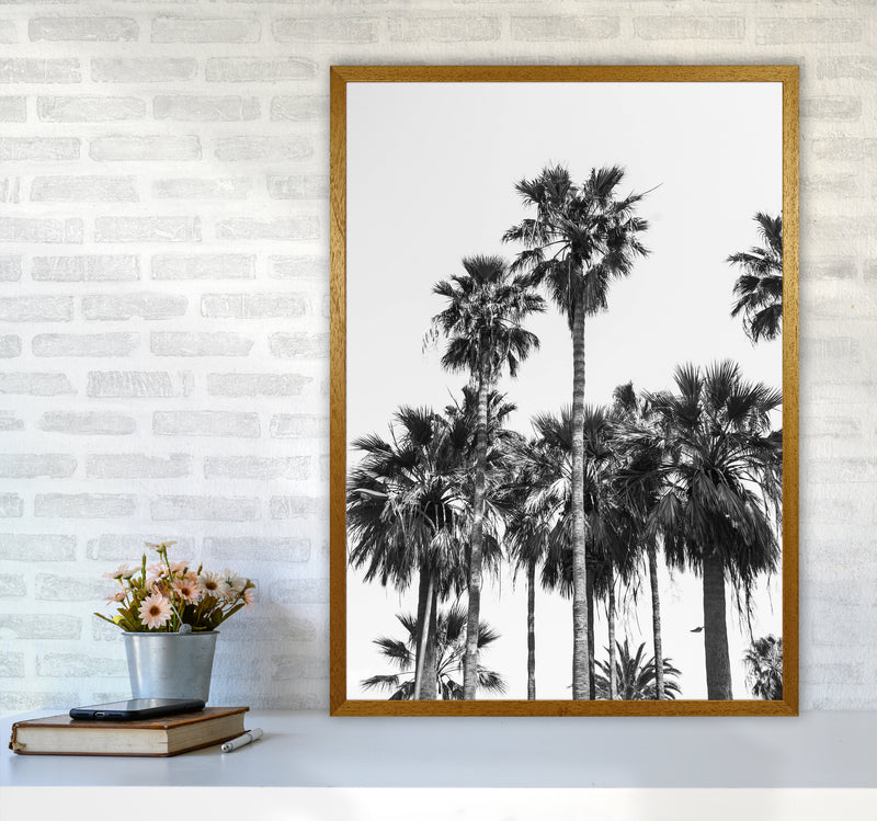 Sabal palmetto II Palm trees Photography Print by Victoria Frost A1 Print Only