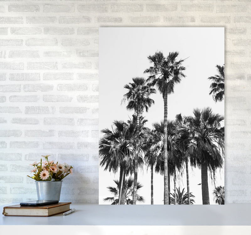 Sabal palmetto II Palm trees Photography Print by Victoria Frost A1 Black Frame