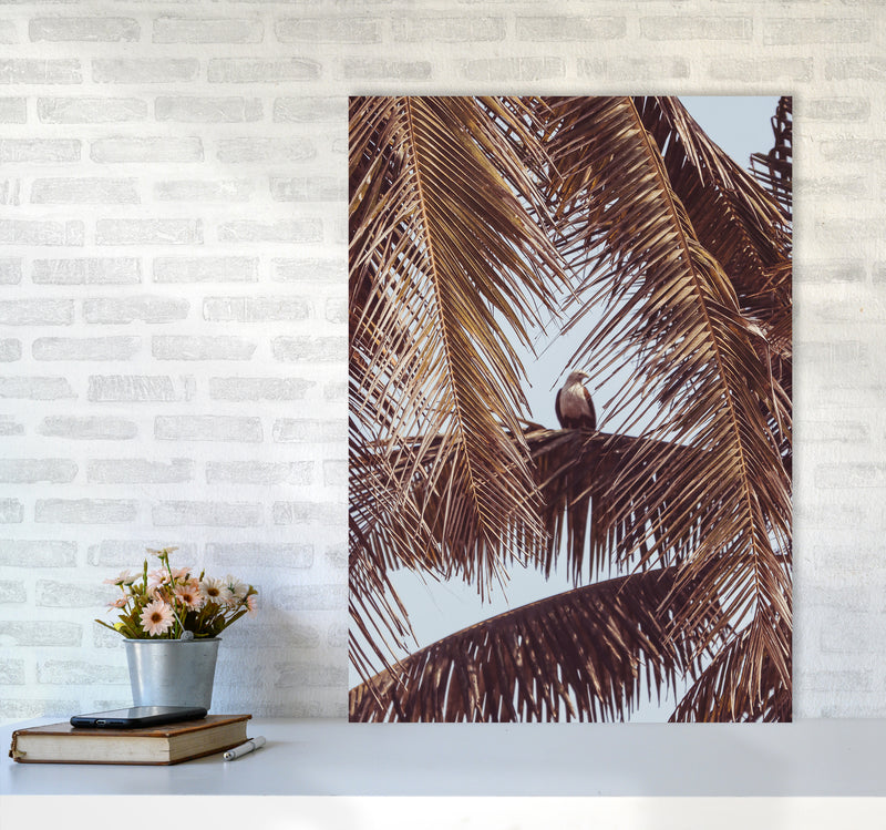 Eagle Photography Print by Victoria Frost A1 Black Frame