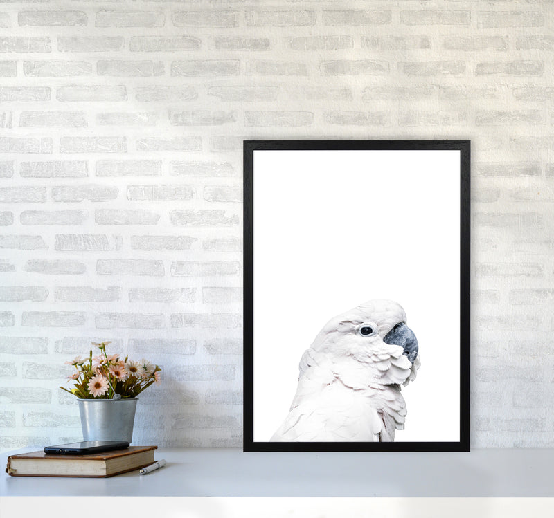 White Cockatoo Photography Print by Victoria Frost A2 White Frame