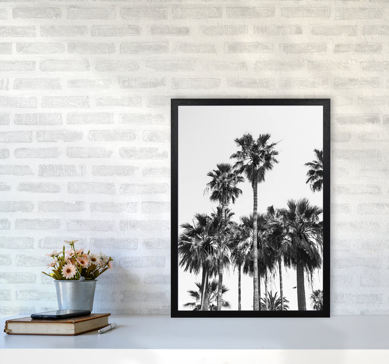 Sabal palmetto II Palm trees Photography Print by Victoria Frost A2 White Frame