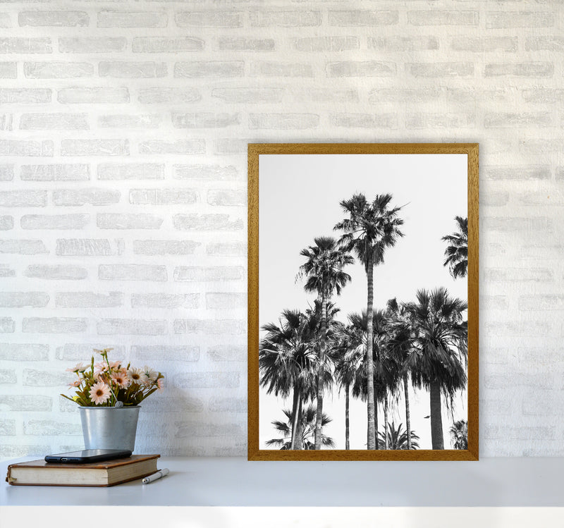 Sabal palmetto II Palm trees Photography Print by Victoria Frost A2 Print Only