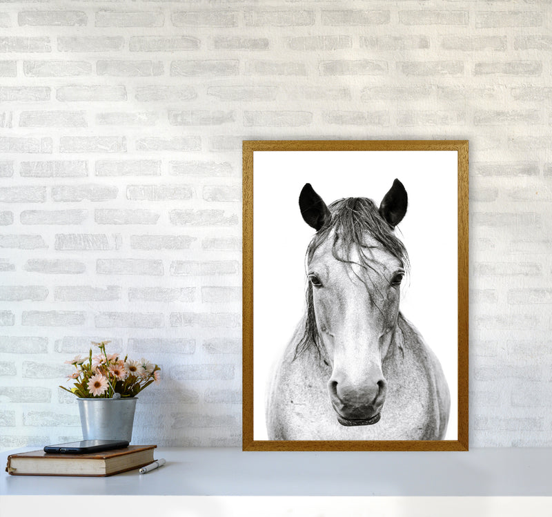 Horse I Photography Print by Victoria Frost A2 Print Only