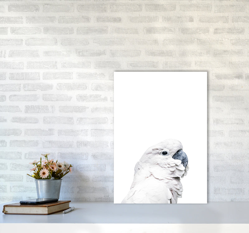 White Cockatoo Photography Print by Victoria Frost A2 Black Frame