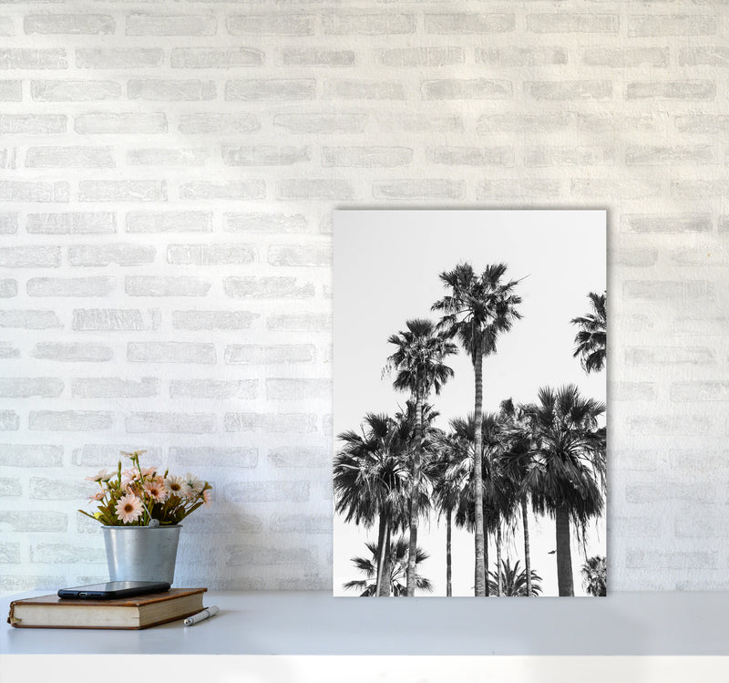 Sabal palmetto II Palm trees Photography Print by Victoria Frost A2 Black Frame