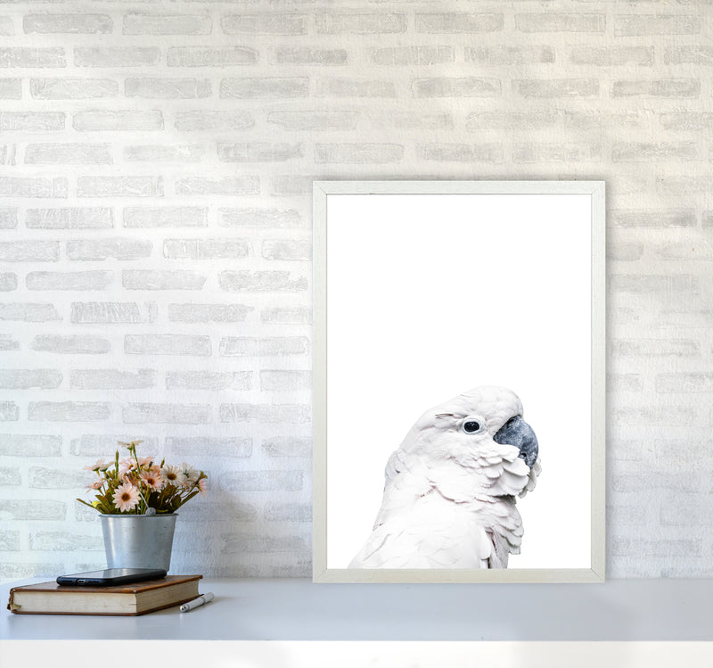 White Cockatoo Photography Print by Victoria Frost A2 Oak Frame