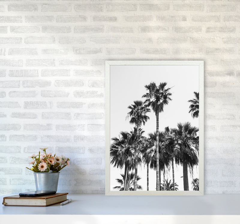 Sabal palmetto II Palm trees Photography Print by Victoria Frost A2 Oak Frame