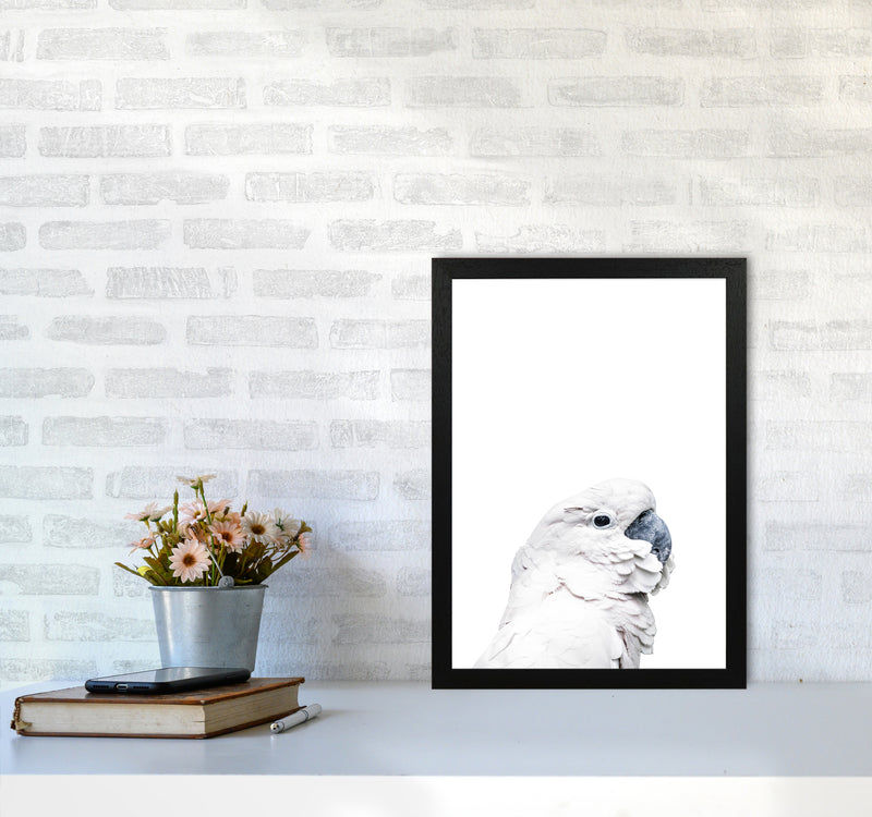 White Cockatoo Photography Print by Victoria Frost A3 White Frame