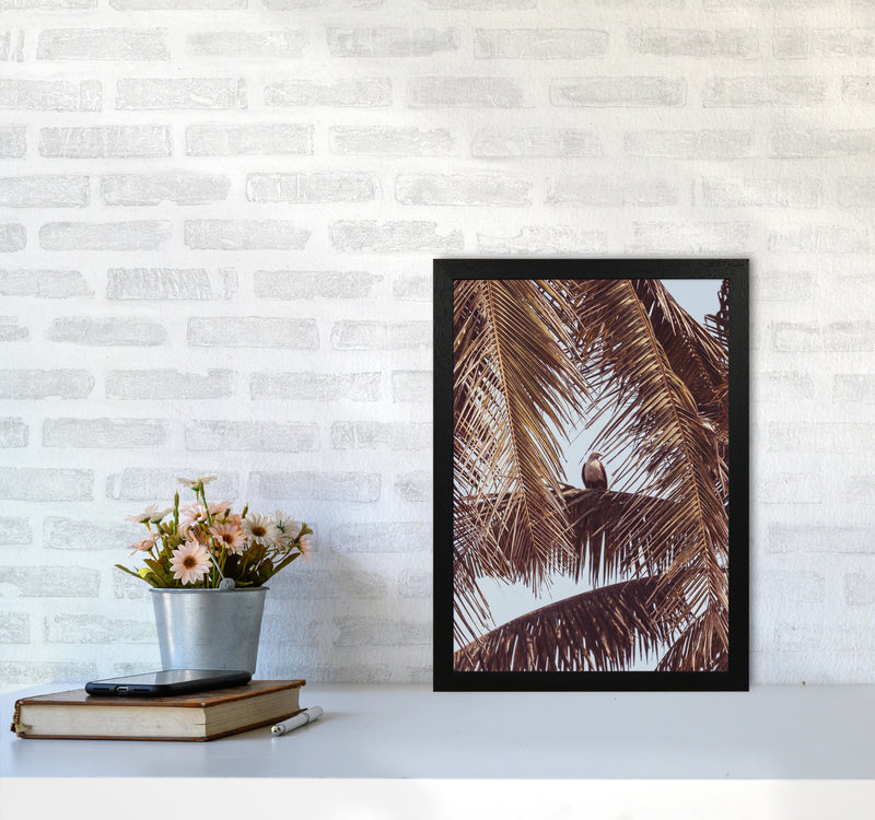 Eagle Photography Print by Victoria Frost A3 White Frame