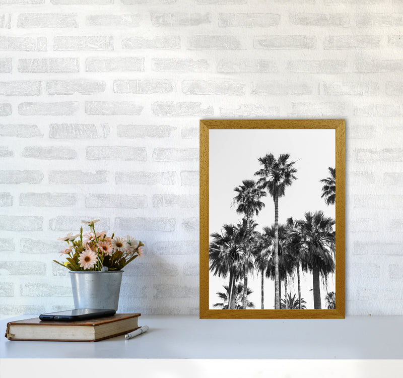 Sabal palmetto II Palm trees Photography Print by Victoria Frost A3 Print Only