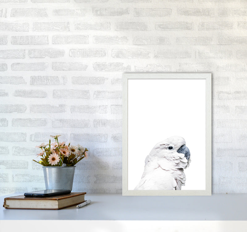 White Cockatoo Photography Print by Victoria Frost A3 Oak Frame