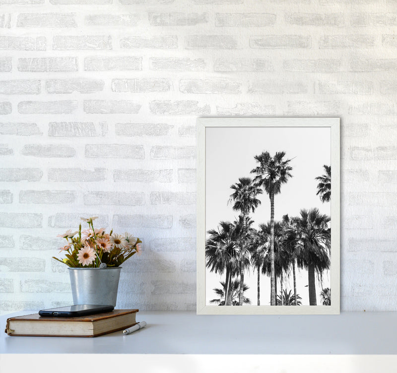 Sabal palmetto II Palm trees Photography Print by Victoria Frost A3 Oak Frame