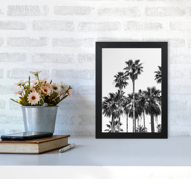 Sabal palmetto II Palm trees Photography Print by Victoria Frost A4 White Frame