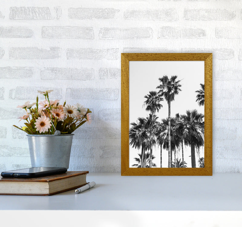 Sabal palmetto II Palm trees Photography Print by Victoria Frost A4 Print Only