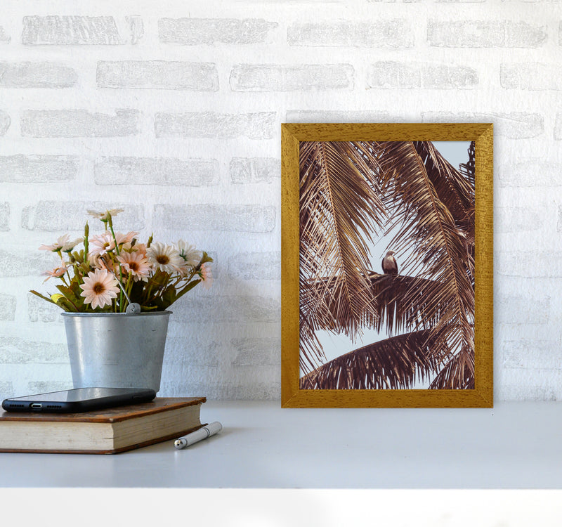 Eagle Photography Print by Victoria Frost A4 Print Only
