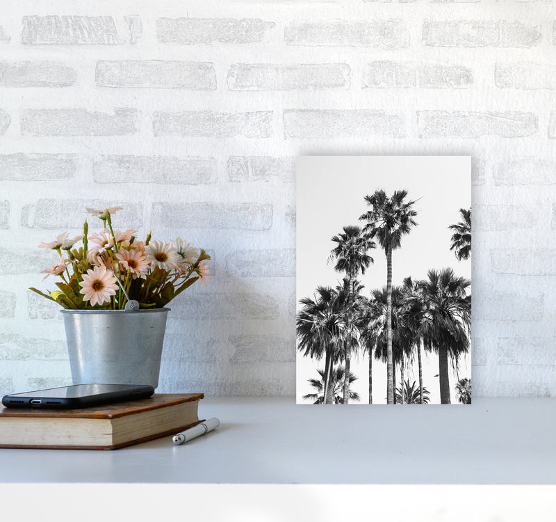 Sabal palmetto II Palm trees Photography Print by Victoria Frost A4 Black Frame