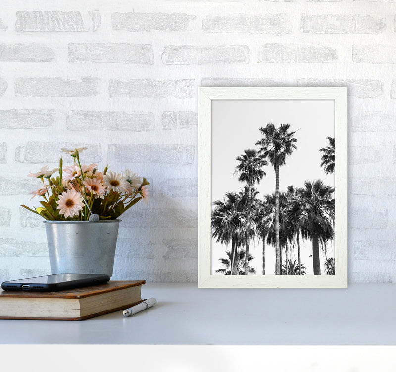 Sabal palmetto II Palm trees Photography Print by Victoria Frost A4 Oak Frame