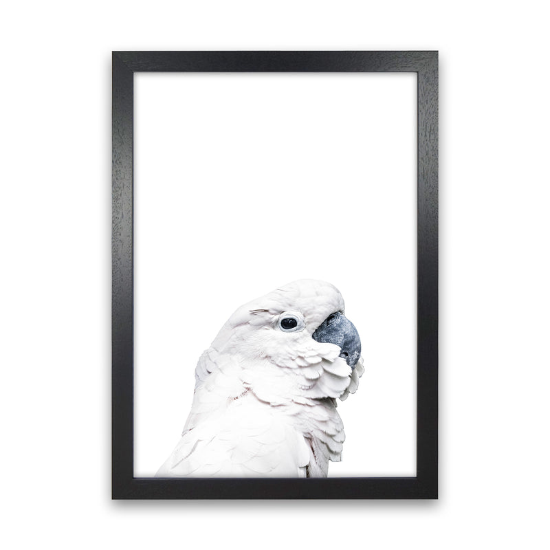 White Cockatoo Photography Print by Victoria Frost Black Grain