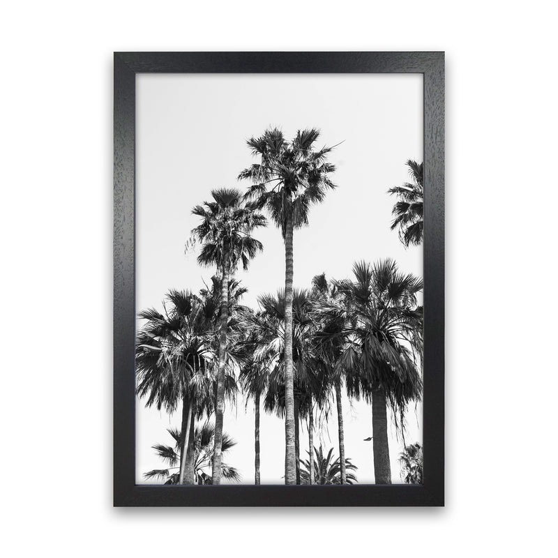 Sabal palmetto II Palm trees Photography Print by Victoria Frost Black Grain