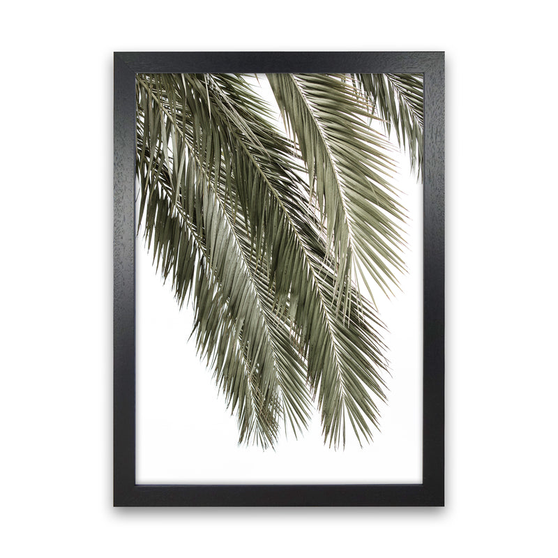 Palms Photography Print by Victoria Frost Black Grain