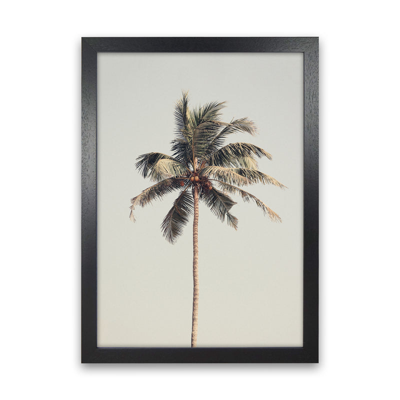 Palm tree by the beach Photography Print by Victoria Frost Black Grain