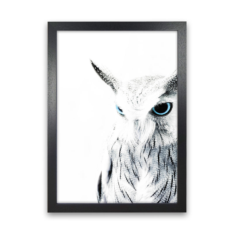Owl I Photography Print by Victoria Frost Black Grain