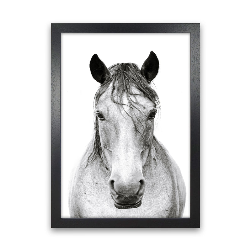 Horse I Photography Print by Victoria Frost Black Grain