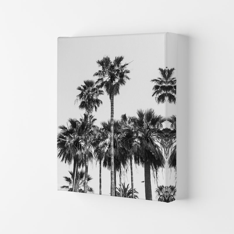 Sabal palmetto II Palm trees Photography Print by Victoria Frost Canvas