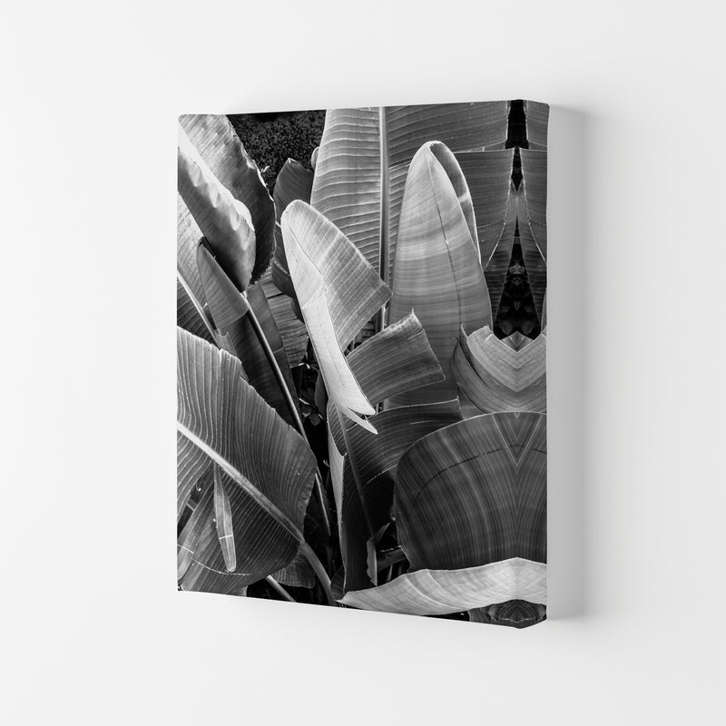 Palms Leafs Photography Print by Victoria Frost Canvas