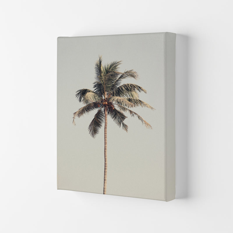 Palm tree by the beach Photography Print by Victoria Frost Canvas