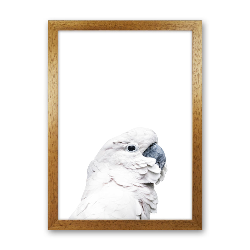 White Cockatoo Photography Print by Victoria Frost Oak Grain