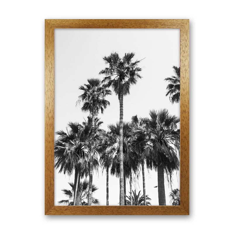 Sabal palmetto II Palm trees Photography Print by Victoria Frost Oak Grain