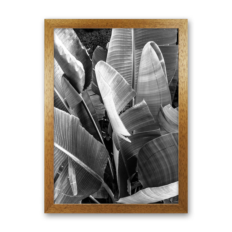 Palms Leafs Photography Print by Victoria Frost Oak Grain