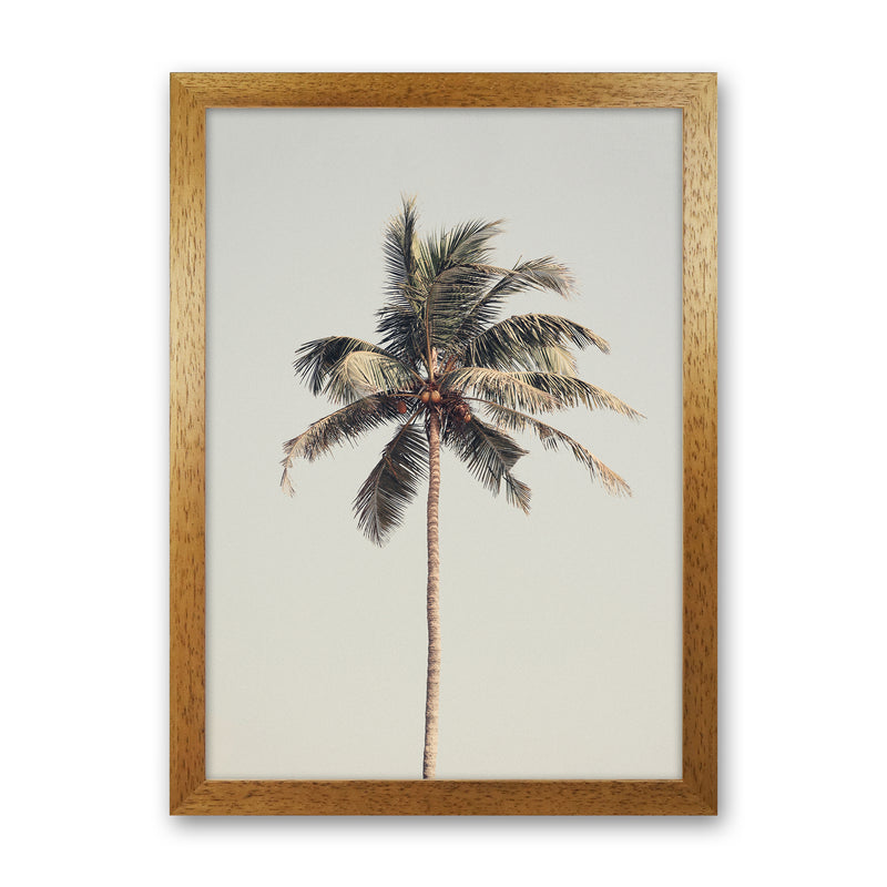 Palm tree by the beach Photography Print by Victoria Frost Oak Grain