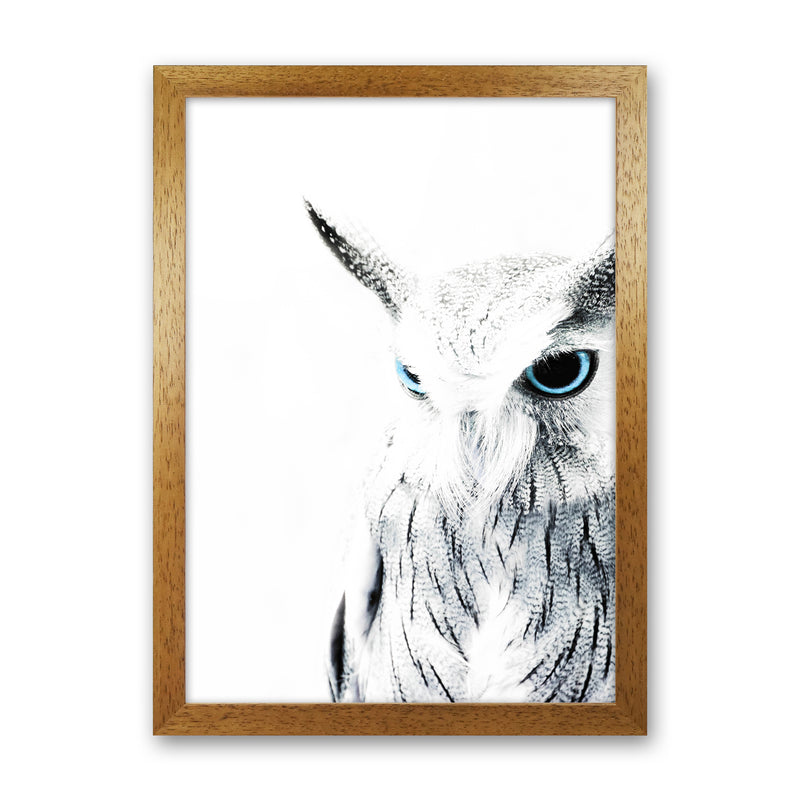 Owl I Photography Print by Victoria Frost Oak Grain