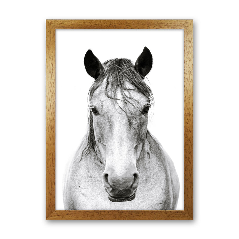 Horse I Photography Print by Victoria Frost Oak Grain