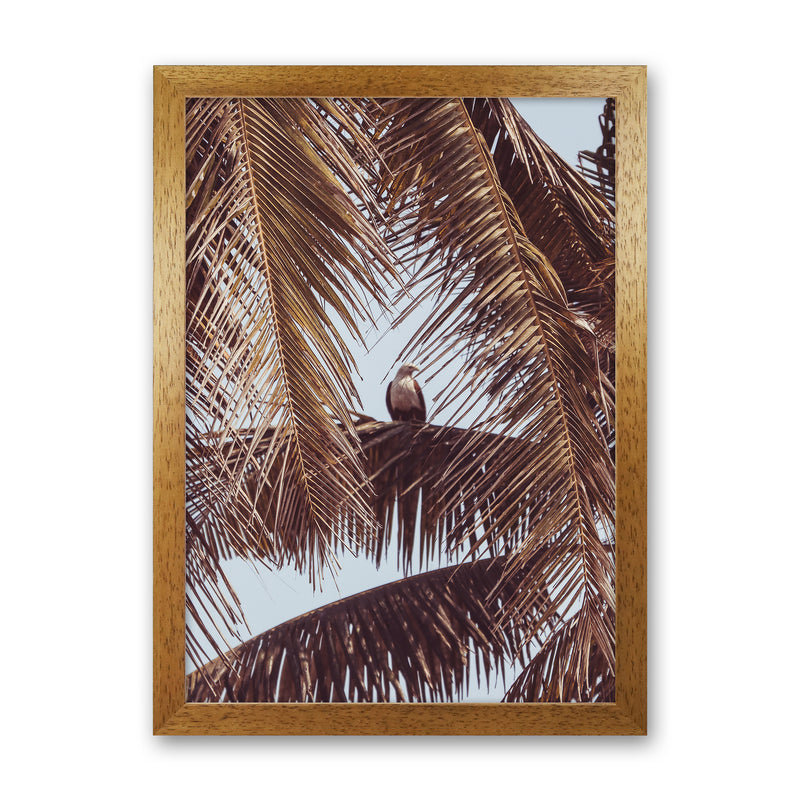 Eagle Photography Print by Victoria Frost Oak Grain