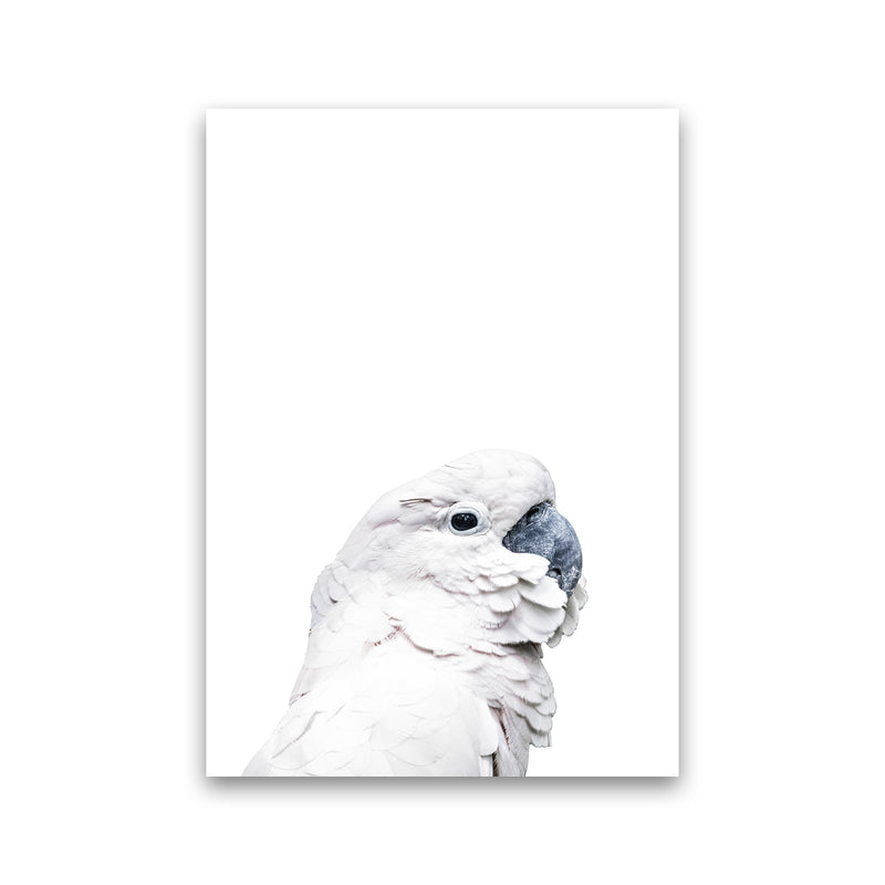 White Cockatoo Photography Print by Victoria Frost Print Only
