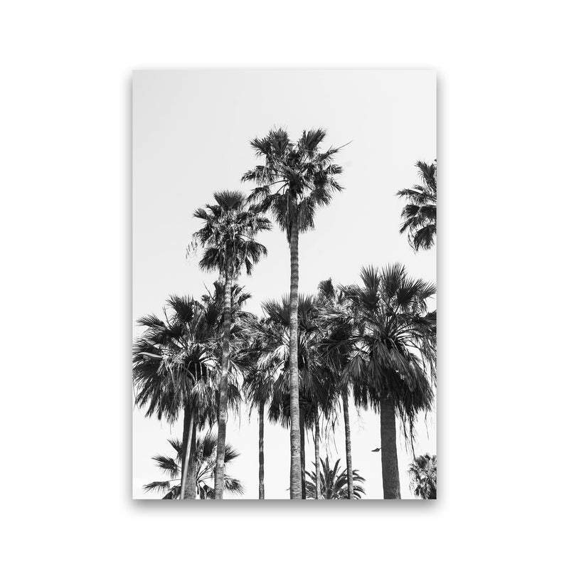 Sabal palmetto II Palm trees Photography Print by Victoria Frost Print Only