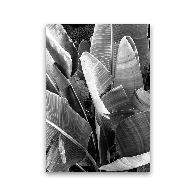 Palms Leafs Photography Print by Victoria Frost Print Only