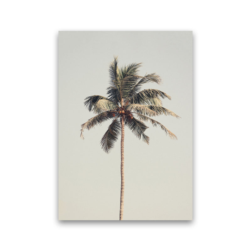 Palm tree by the beach Photography Print by Victoria Frost Print Only
