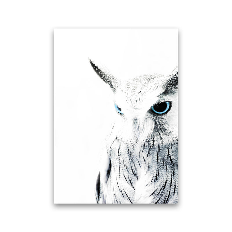 Owl I Photography Print by Victoria Frost Print Only