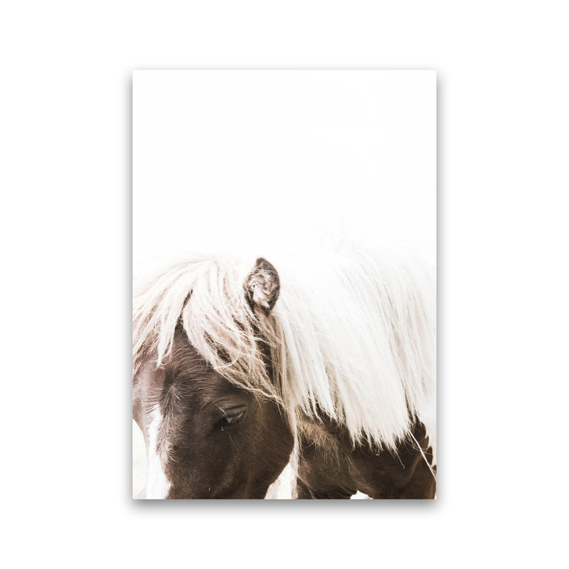 Horse III Photography Print by Victoria Frost Print Only
