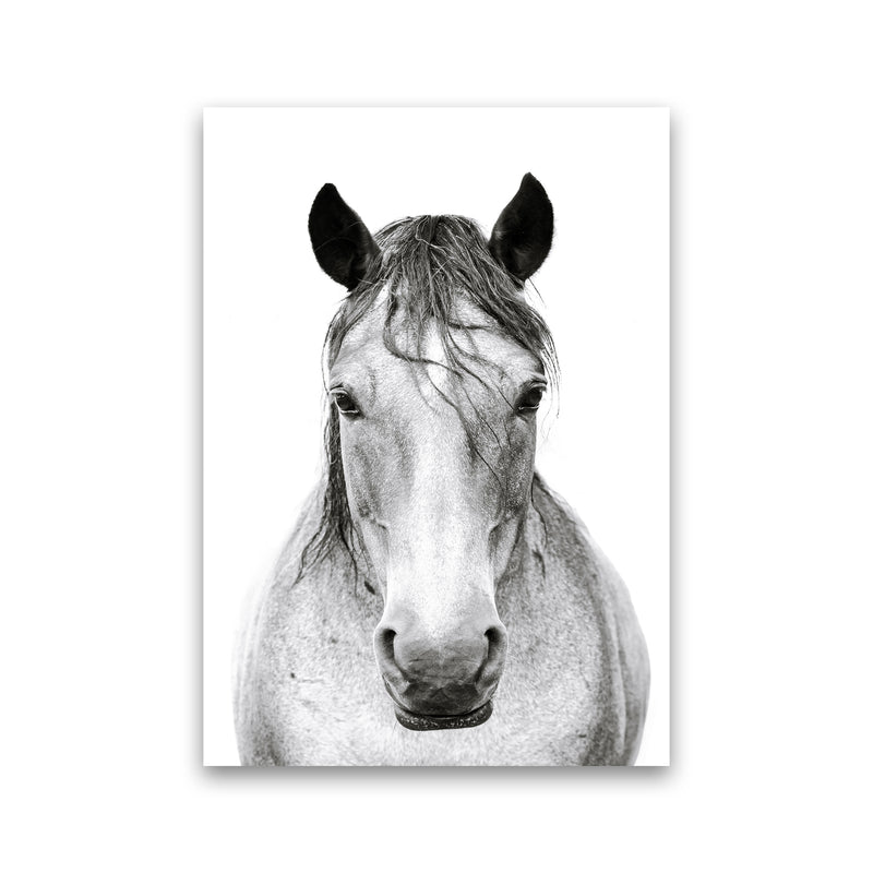 Horse I Photography Print by Victoria Frost Print Only