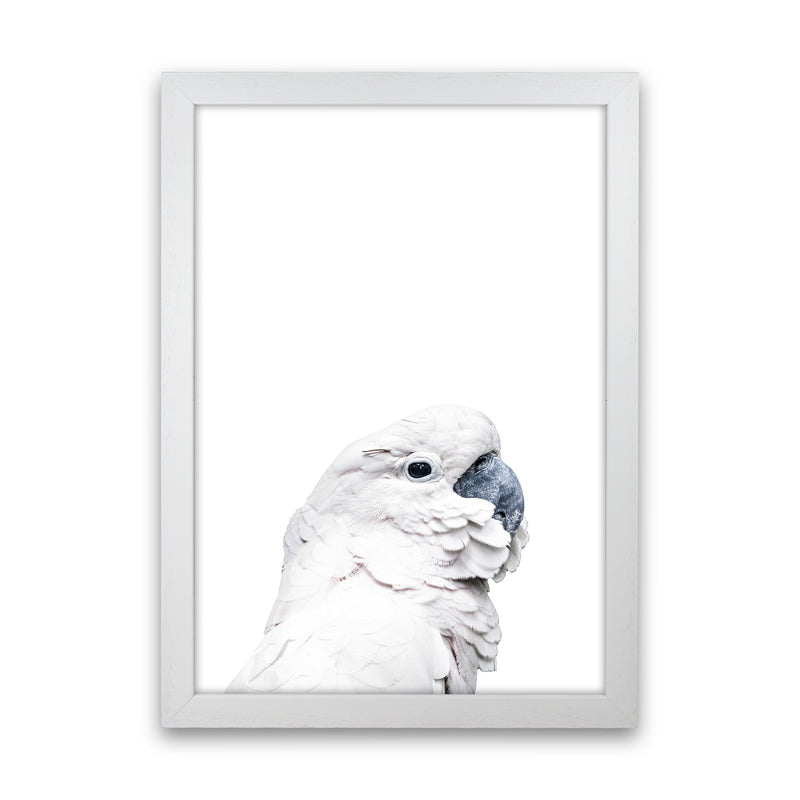 White Cockatoo Photography Print by Victoria Frost White Grain
