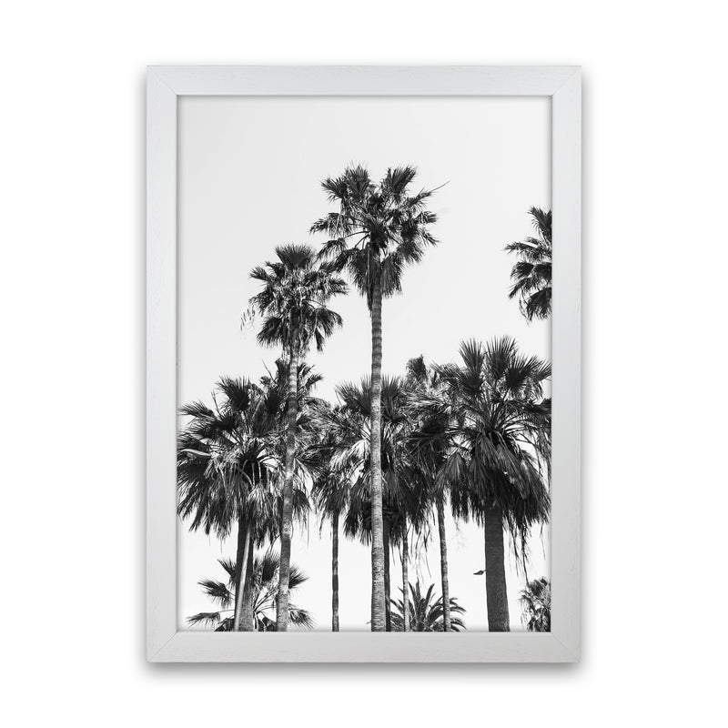 Sabal palmetto II Palm trees Photography Print by Victoria Frost White Grain
