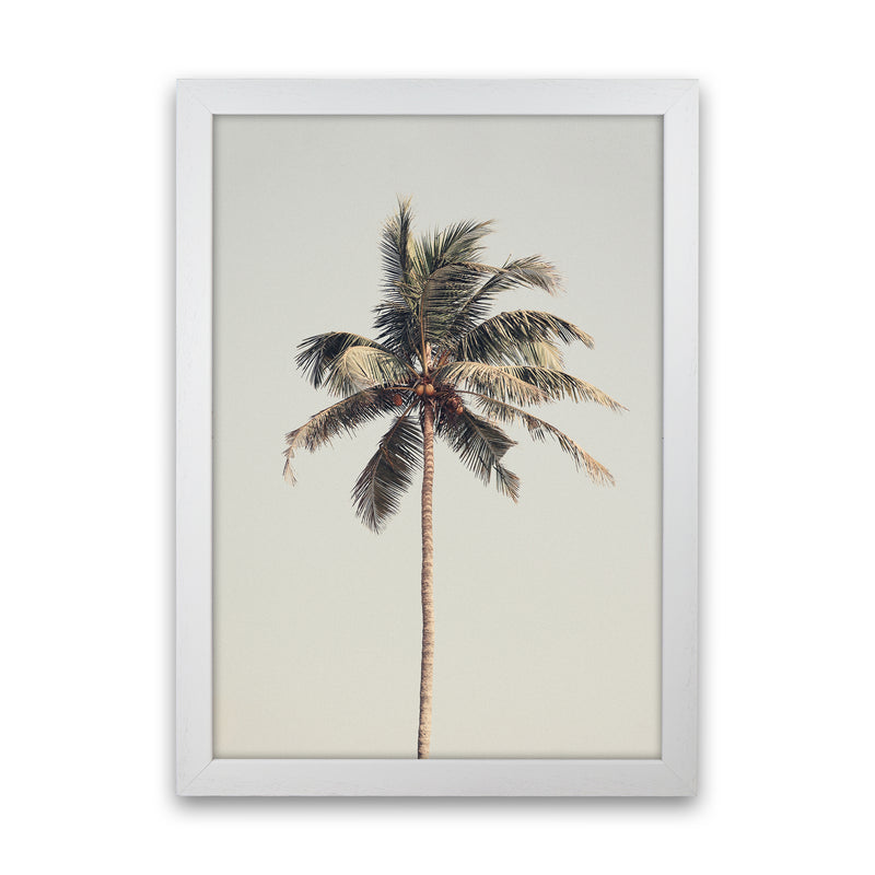 Palm tree by the beach Photography Print by Victoria Frost White Grain